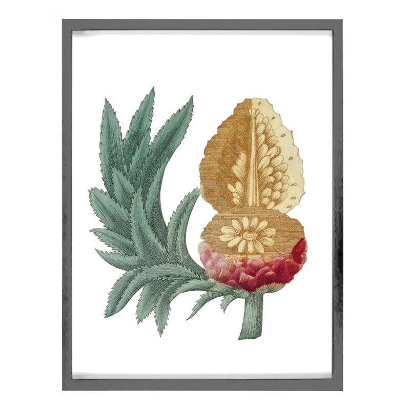 tableau ananas sur toile représentant une gravure du XVIIIème siècle